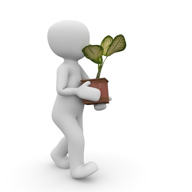 plant-1015412_640